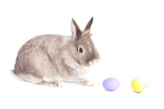 Little bunny with Easter Eggs stock photos