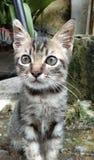 Cute little cat stock images
