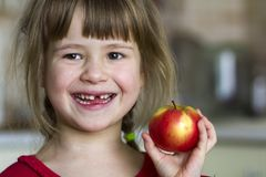 A cute little curly toothless girl smiles and holds a red apple. Portrait of a happy baby eating a red apple. The child loses milk teeth. Healthy food Royalty Free Stock Image