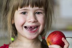 A cute little curly toothless girl smiles and holds a red apple. Portrait of a happy baby eating a red apple. The child loses milk teeth. Healthy food Stock Images
