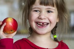 A cute little curly toothless girl smiles and holds a red apple. Portrait of a happy baby eating a red apple. The child loses milk. Teeth. Healthy food Royalty Free Stock Images