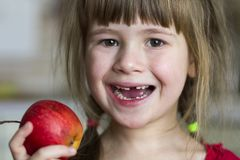 A cute little curly toothless girl smiles and holds a red apple. Portrait of a happy baby eating a red apple. The child loses milk. Teeth. Healthy food Stock Photos
