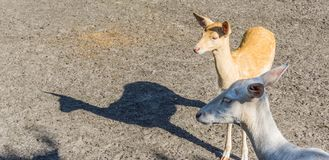 Cute little deer with head of another deer stock photo