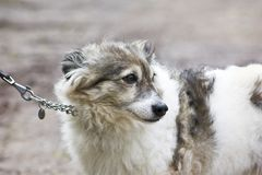 Cute Little Dog Stock Photos