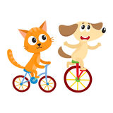 Cute little dog and cat, kitten characters riding bicycles together Stock Photography