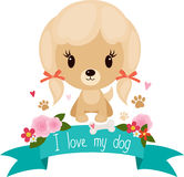 Cute little dog Royalty Free Stock Photo