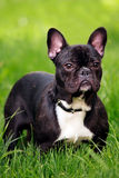 Cute little dog Royalty Free Stock Images