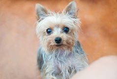 Cute little dog Stock Images