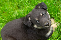 Cute little dog looking up. In the grass Royalty Free Stock Photos