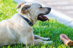 Cute little dog playing in the backyard Stock Photos