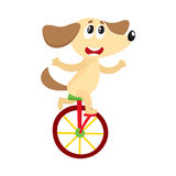 Cute little dog, puppy character riding bicycle, unicycle, cycling Royalty Free Stock Photography