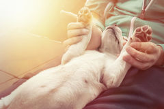 Cute little dog puppy cuddles and shows paws Stock Photos