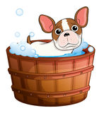 A cute little dog taking a bath Royalty Free Stock Photo