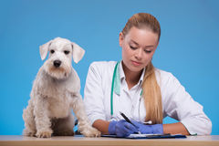Cute little dog visits vet Stock Images