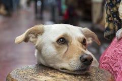 Cute little dog waiting Stock Image