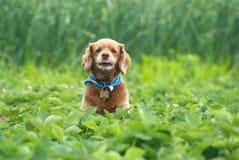 Cute Little Dog