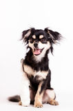 Cute little dog on white background at studio Stock Images