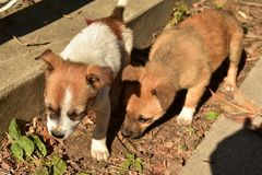 Little dogs. Cute little dogs stock photography