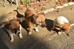 Little dogs. Cute little dogs stock photo