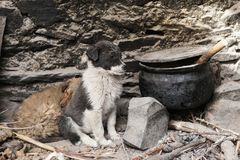 Cute little dogs wait for their dinner at the remote house. Cute little dogs wait for their dinner at the house in remote village in Leh,Ladakh,Jammu and Kashmir stock image