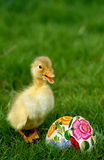 Cute little duckling and easter eggs Royalty Free Stock Photos