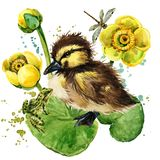 Cute little duckling. yellow water lily watercolor background. Stock Photos