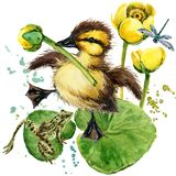 Cute little duckling. yellow water lily watercolor background. royalty free illustration