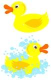 Cute Little Ducks Stock Photo
