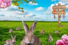 Cute little easter bunnies on green meadow stock photos