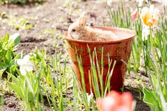 Cute Little Easter Bunny Royalty Free Stock Image