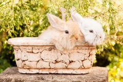 Cute Little Easter Bunny Royalty Free Stock Photo