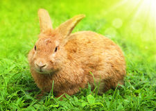 Cute Little Easter Bunny in the Meadow. Royalty Free Stock Image