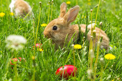 Cute Little Easter Bunny Royalty Free Stock Images