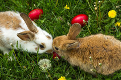 Cute Little Easter Bunny Royalty Free Stock Photos