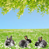 Cute Little Easter Bunny Stock Photography