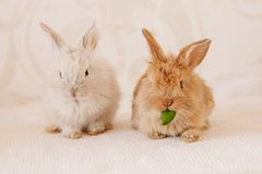 Cute Little Easter Bunny Stock Image