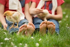 Cute little feet of small children, playing with baby chicks, Royalty Free Stock Photo