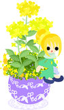 The cute little flowerpot -colza- Stock Images
