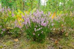 Cute little flowers Stock Photo