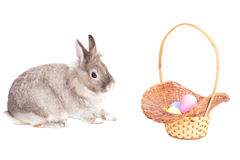 Cute Easter Bunny with a basket of eggs Royalty Free Stock Photography