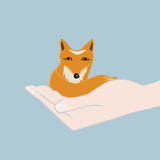 Cute little fox cupped in a hand Stock Photo
