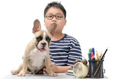 Cute little French bulldog playing with boy royalty free stock photo
