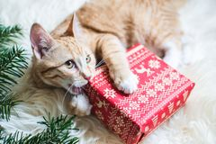 Cute little ginger kitten laying in soft white faux fur blanket, holding red paper gift box Christmas. New Year Concept vintage stock photo