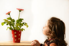 Cute little girl admiring vase with flowers Royalty Free Stock Images
