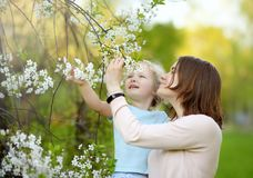 Cute little girl in the arms of her beautiful mother in cherry or apple orchard during flowering. Easter royalty free stock photos