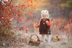 Cute little girl with a basket of red apples in the fall in the park stock photo