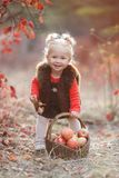 Cute little girl with a basket of red apples in the fall in the park stock photography