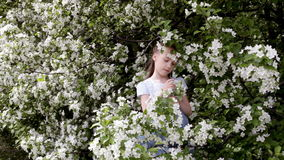 Cute little girl in blooming apple tree garden at spring stock video footage