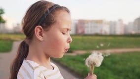 Cute little girl blowing on dandelion on city lawn in summer day stock footage