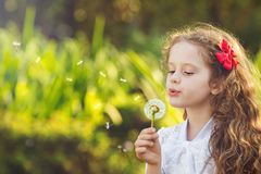Cute little girl blowing dandelion. Stock Images